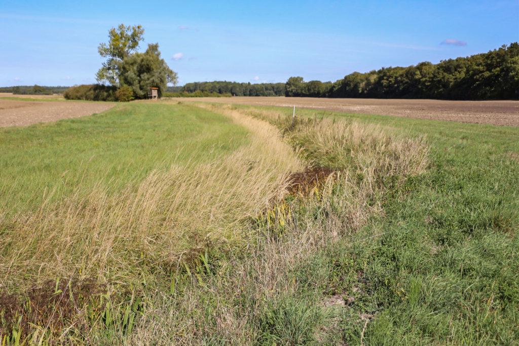 Schutzstreifen-um-Gräben,-Sölle-und-Schlucker-agrar-gbr-gross-kiesow-landwirt-azubi-lehrling