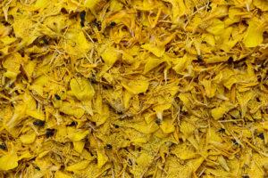 demobetriebe-gross-kiesow-marienkäfer-kornblumen-erbsen-schaedlinge-5