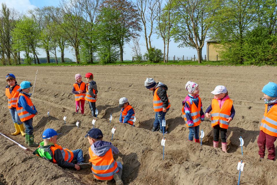projekt-knolli-kartoffel-agrar-gross-kiesow-landwirtschaft