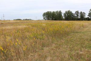Projekt-Greifswalder-Agrarinitiative-Bienenweide-05
